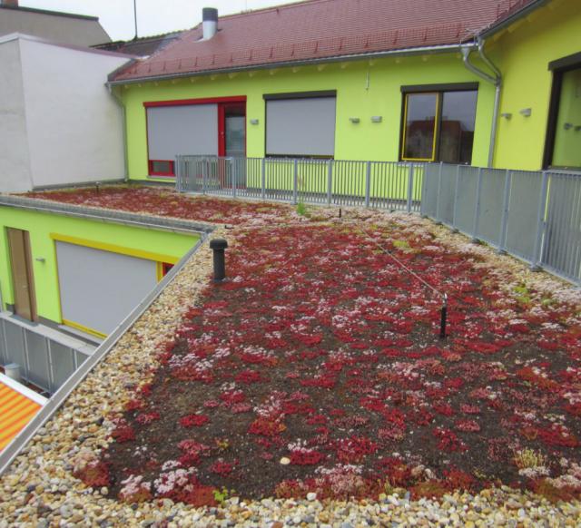 Innerstädtische Kita Zittau - Gründach auf den Terrassendächern